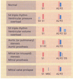 Normal and additional heart sounds