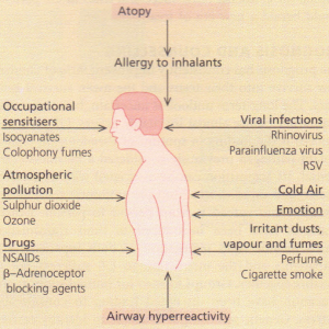 Causes of asthma. RSV, respiratory syncytial virus.