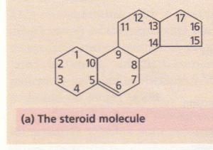 (a) The steroid molecule.