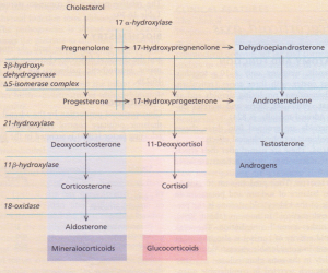 (b) The major steroid biosynthetic pathways.