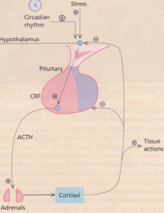 Control of the hypothalamic-pituitary-adrenal axis.